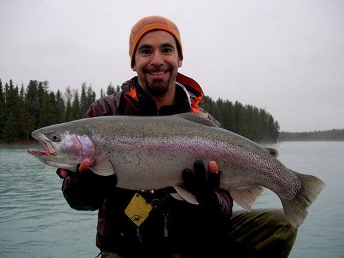 Gabe's huge Kenai River Rainbow Trout